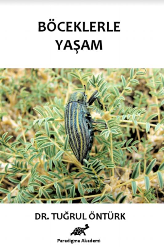 Böceklerle Yaşam